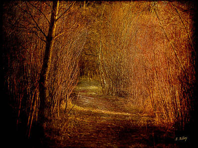 Daysray Photograph - The Golden Path by Fran Riley