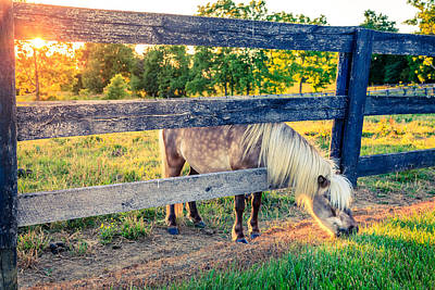 Horse Photograph - The Grass Is Greener by Alexey Stiop