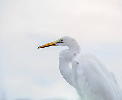 The Great Egret Print by Camille Lopez