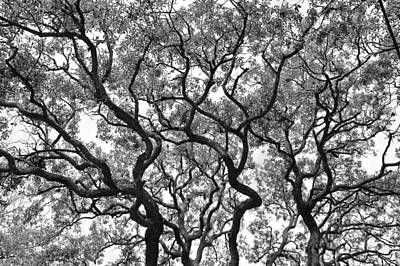 Whites Print featuring the photograph The Great Oak In Black And White by Aimee L Maher Photography and Art Visit ALMGallerydotcom