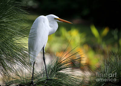 Great White Egret Photograph - The Great White Egret by Sabrina L Ryan