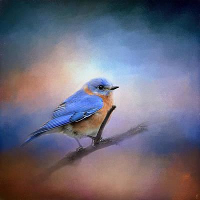 The Happiest Blue - Bluebird Print by Jai Johnson