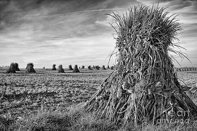 Amish Harvest Print by Dennis Hedberg