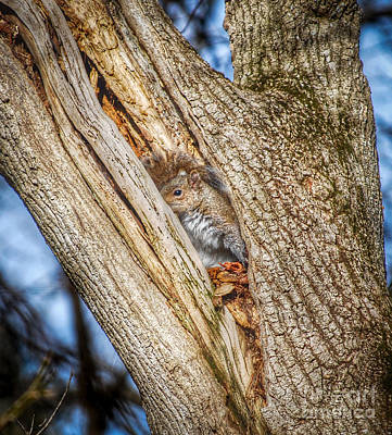Squirrel Photograph - The Hiding Place  by Kerri Farley