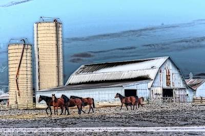 The Horse Barn Print by Cheryl Cencich