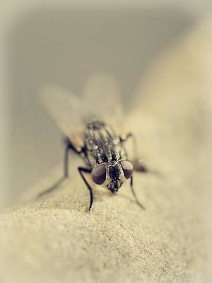 Filth Photograph - The Housefly I by Marco Oliveira