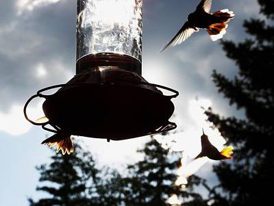 Photograph - The Hummer's Dance by Cherie Haines