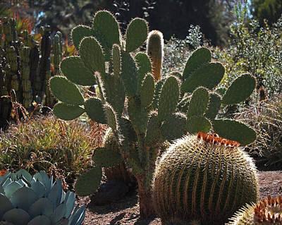 The Huntington Desert Garden Print by Rona Black