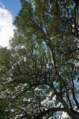 The Intricate Natural Canopy - Vertical Print by Georgia Mizuleva