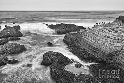 The Jagged Rocks And Cliffs Of Montana De Oro State Park In California In Black And White Print by Jamie Pham