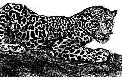 African Big Cats Drawing - The Jaguar  by Paul Sutcliffe