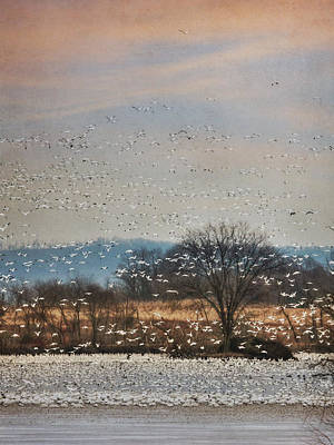 Geese Digital Art - The Journey Begins by Lori Deiter