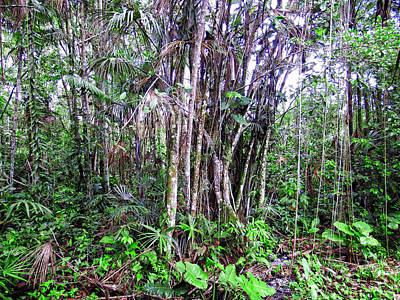 Amazon Photograph - The Jungle by Kurt Van Wagner