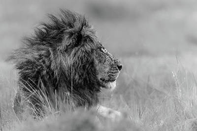 Savannah Photograph - The King Is Alone by Massimo Mei
