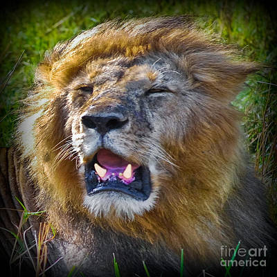 Southafrica Photograph - The King Of The Jungle by Gary Keesler