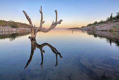 Reflection Photograph - The Kings Hand 1 Color by Scott Campbell