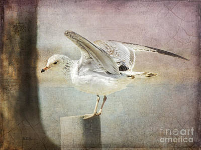 Seagull Digital Art - The Landing by Betty LaRue