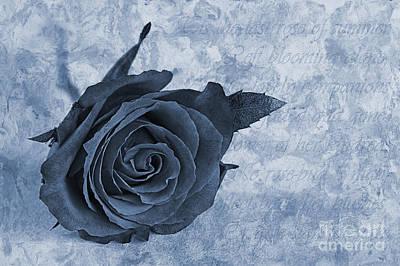 Fragility Digital Art - The Last Rose Of Summer Cyanotype by John Edwards