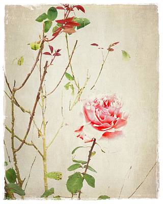 Last Strand Photograph - The Last Rose Of Summer by Patricia Strand
