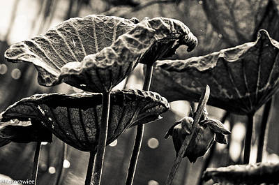 Photograph - The Lines On Leafs And Age by Kornrawiee Miu Miu
