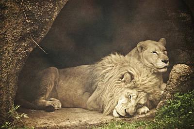 The Lion Sleeps Tonight Print by Trish Tritz