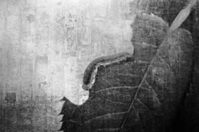 Manipulation Photograph - The Little Inchworm - B And W by Rhonda Barrett
