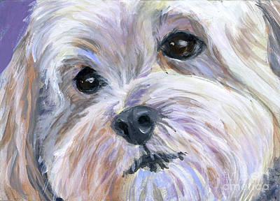 Havanese Painting - The Little White Dog by Hope Lane