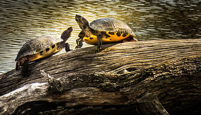 Pond Turtle Photograph - The Log Waltz by Karen Wiles