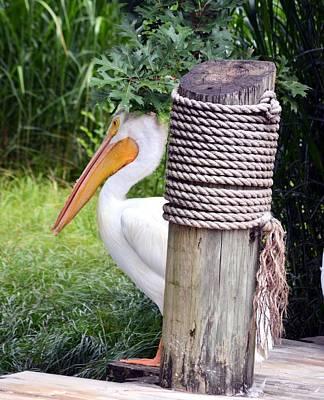 Lone Pelican Photograph - The Lone Pelican by Maria Urso