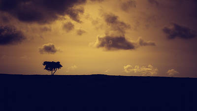 A Summer Evening Landscape Photograph - The Loneliness Of A Moorland Tree by Chris Fletcher