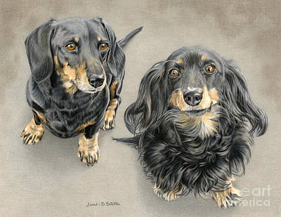Doxie Drawing - The Long And Short Of It by Sarah Batalka