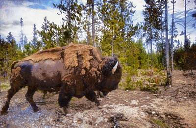 Bison Mixed Media - The Long Journey by Dan Sproul
