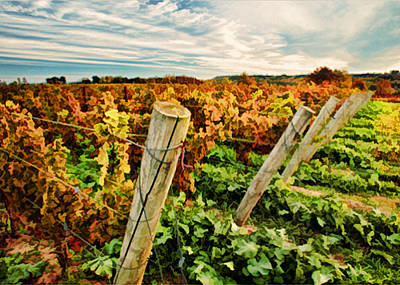 The Look Of Fall In The Vineyard Sky Print by Elaine Plesser