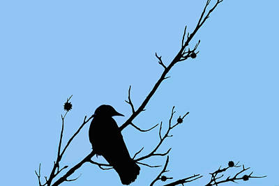 Crow Photograph - The Crows Lookout Post by Lesa Fine