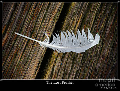 Wet Fly Digital Art - The Lost Feather by Tikvah's Hope