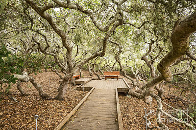 Wooden Platform Photograph - The Magical El Moro Elfin Forest. by Jamie Pham