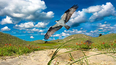 Osprey Digital Art - The Majestic  by Betsy Knapp