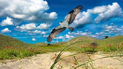Osprey Digital Art - The Majestic  by Betsy C Knapp