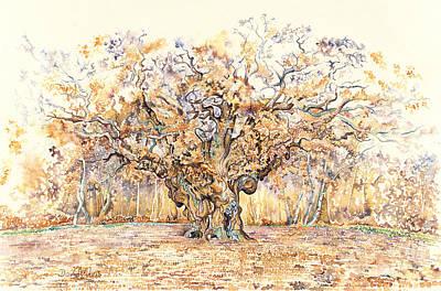 Inktense Drawing - The Major Oak Of Sherwood Forest by David Evans