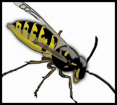 Wasp.insect Digital Art - The Mighty Wasp by Florian Rodarte
