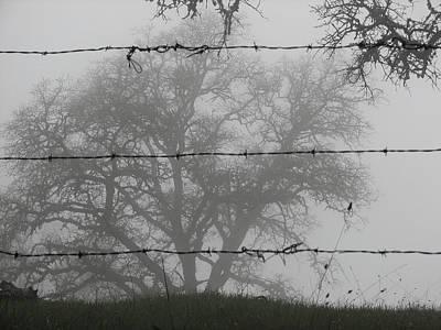 The Mist Original by Darin Volpe