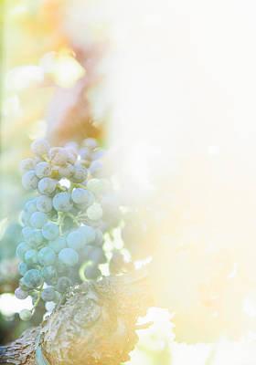 Photograph - The Modern Grape 2 by Clint Brewer