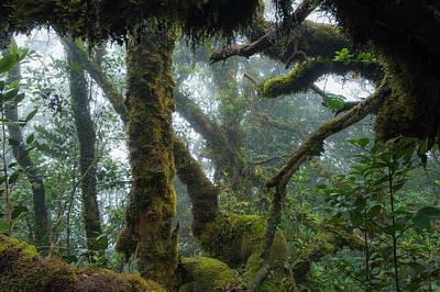 The Mossy Forest Of The Cameron Highlands Print by Scubazoo