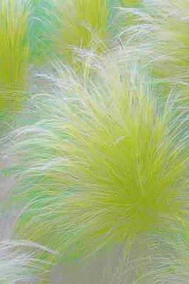 The Nature Of Grass   Print by Ben and Raisa Gertsberg