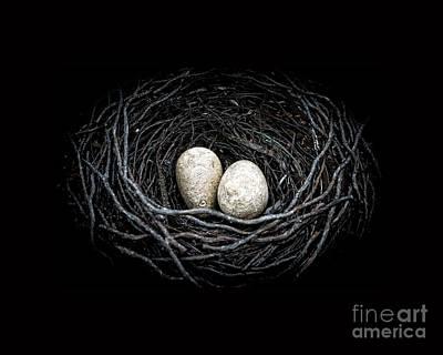 Bird Nest Photograph - The Nest by Edward Fielding