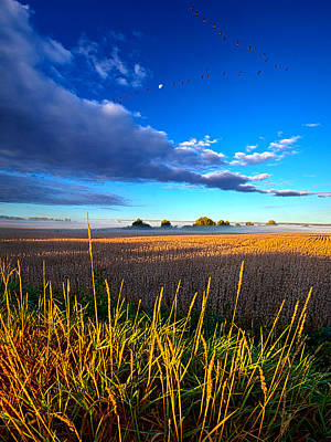 The Northern Winds Sing A Lullaby Print by Phil Koch