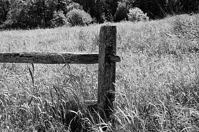 The Old Fence Print by Sharon L Stacy
