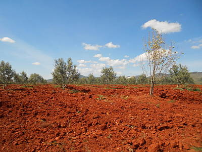 Blue Photograph - The Olive Copper Field by Noreen Hegarty