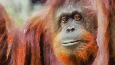 Ape Mixed Media - The Orangutan by Dan Sproul