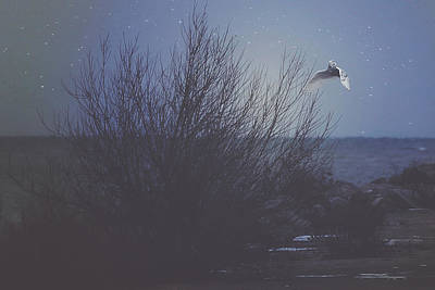 Winter Night Photograph - The Owl by Carrie Ann Grippo-Pike